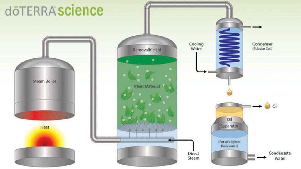 Steam Distillation Essential Oils