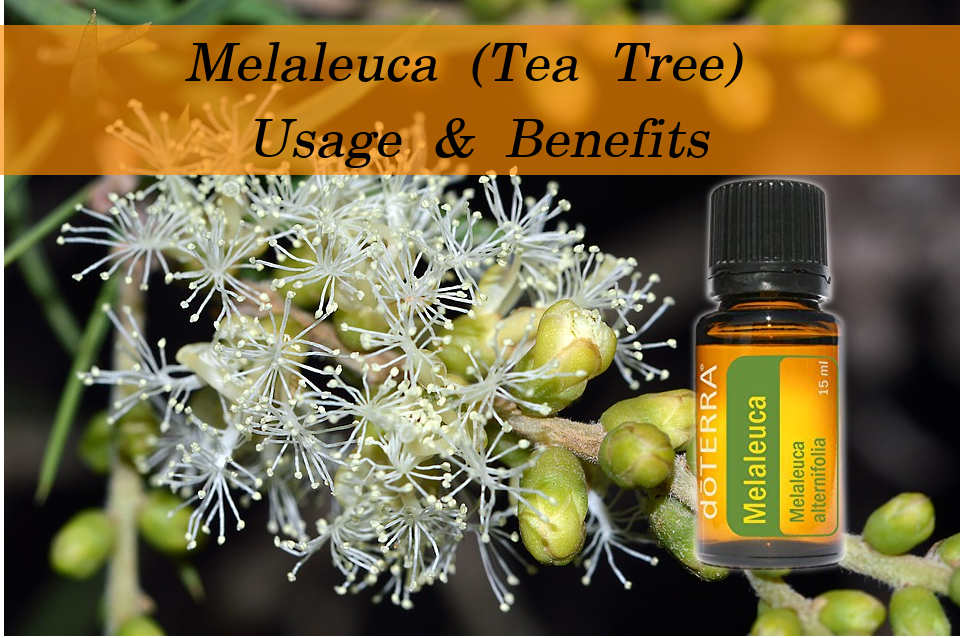 Melaleuca Oil Usage and Benefits