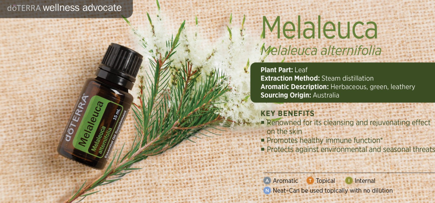 Top 7  Melaleuca Oil Benefits. Melaleuca DIY recipes