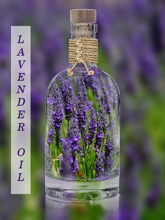 Lavender Oil Usage and Benefits
